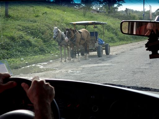 typical sight of local Amish farmer