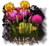 Alisa - 3094