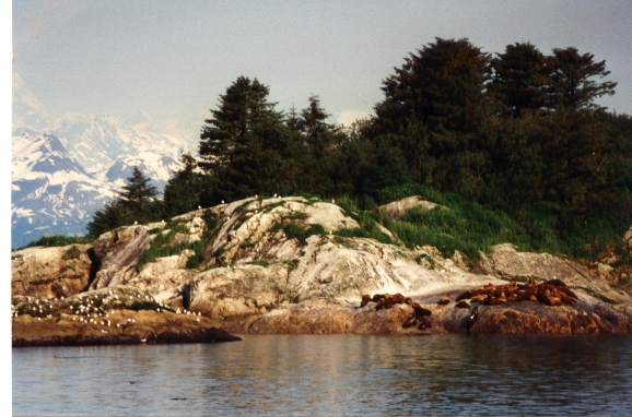 Marble Island bird rookery and sea lion haul out