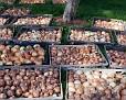 Farm Day Fall 2011-107