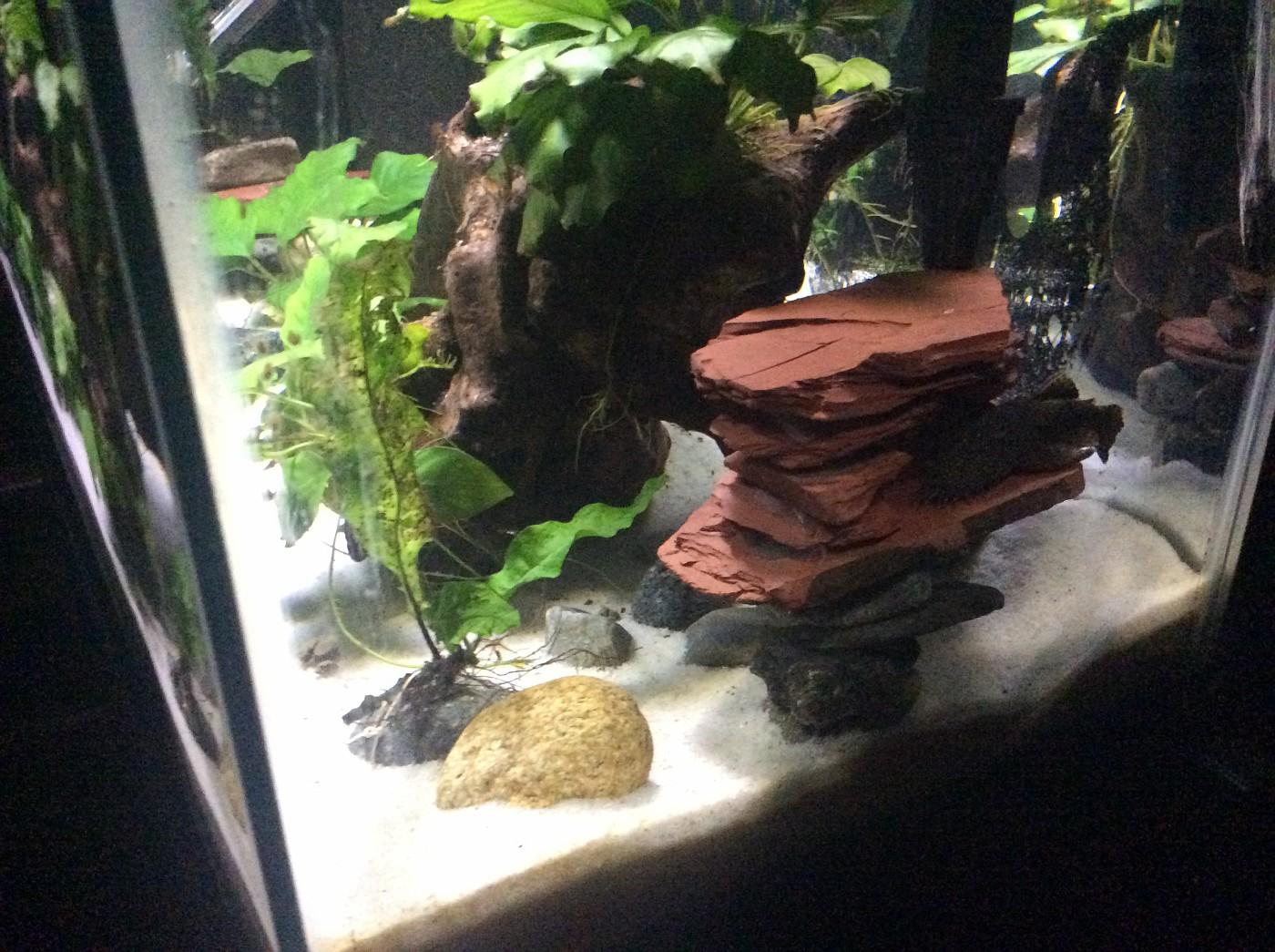 Got My Third Tank A 10 Gallon Page 2 Tropical Fish