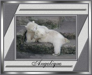 Angelique-gailz0207-bearcubs.jpg