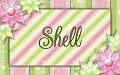 Shell - Spring