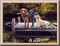 dogshavingfuntjcAunt