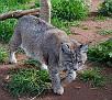 Pepperbelly-March-2011_DSC4269.jpg