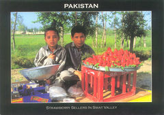 Pakistan - Strawerberry Sellers in Swat Valley NT