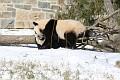 070216 Natl Zoo060