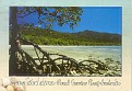 QUEENSLAND - Cape Tribulation