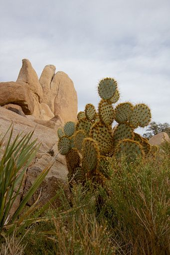 cactus and rocks