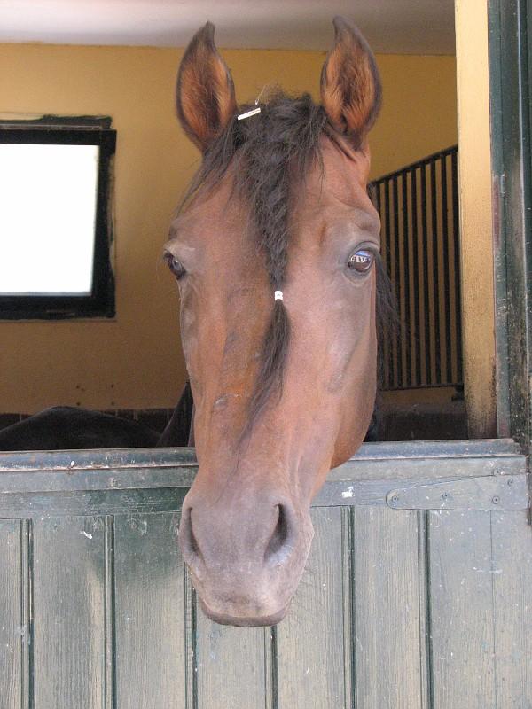 !bodega and horse