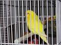 Jail Bird