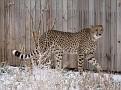 071208 Denver Zoo 0018