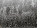 ansel-adams-wilderness-12 1600