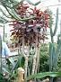 20060603 succulentadag  009