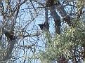 Bird Bredene 20120527 002 3
