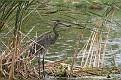 Heron Floating Island #13