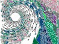 0539_EVAvivi-vi.jpg