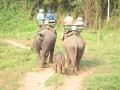 Mae Ping Elephant Camp near Chiang Mai in Northern Thailand Day 12 Feb 23-2006 (48)