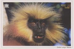 India - GOLDEN LANGUR NA