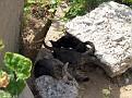 Mother Cat & Kittens along the Moll - Palamós