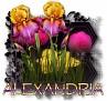 Alexandria - 3094