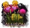 Allison - 3094