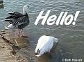 Hello002