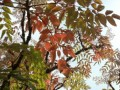 8298 Autumn Leaves
