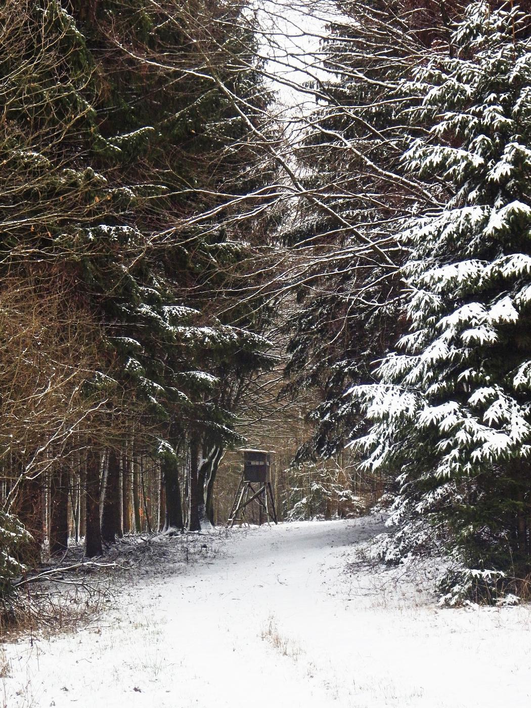 Kropsheider Wald