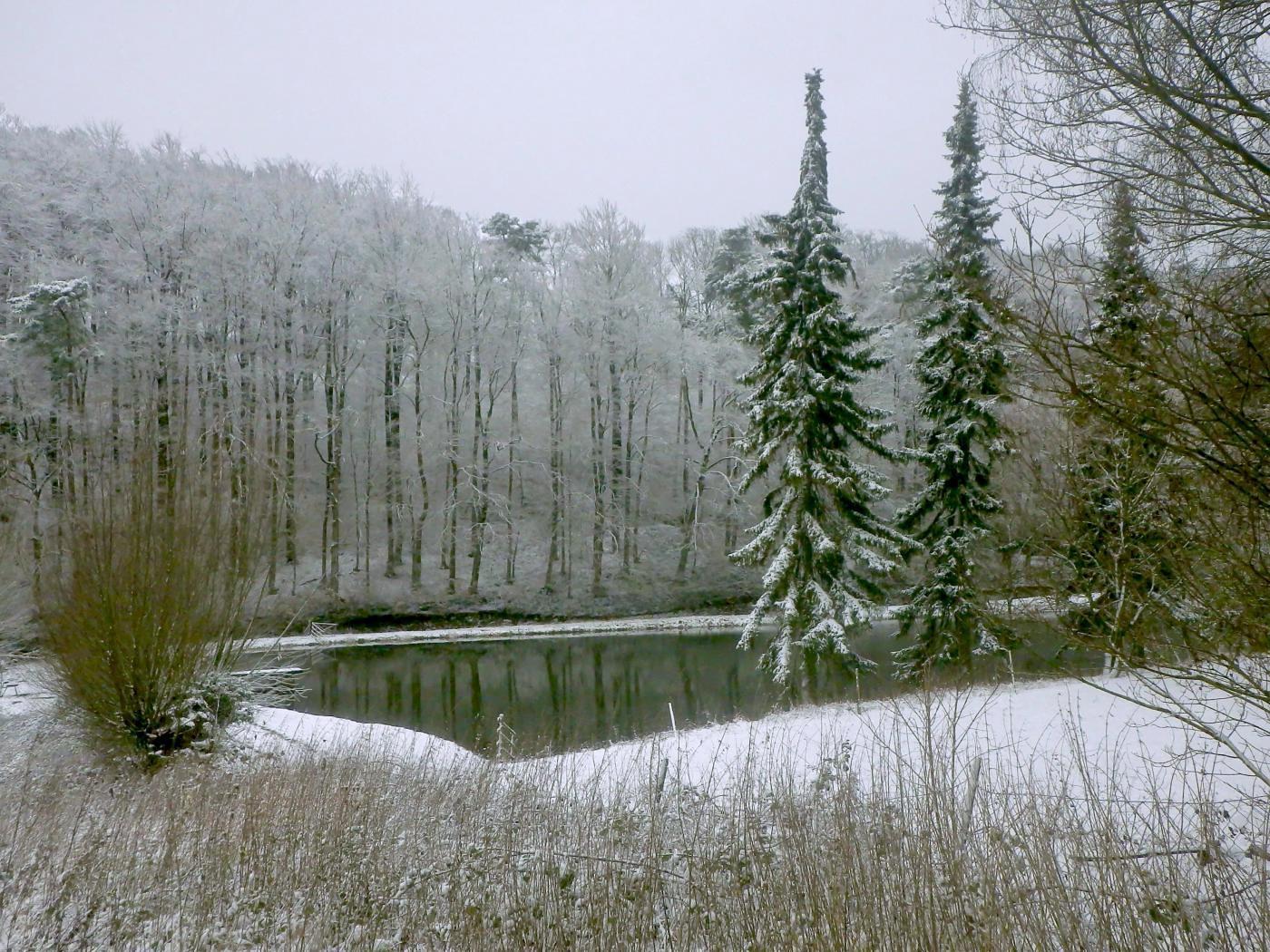 Teich am Bastenstein