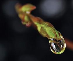 Just a drop ...