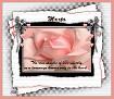 Marta-gailz-pink rose