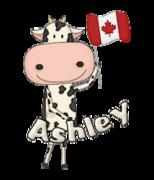 Ashley - CanadaDayCow
