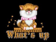 What's up - CuteKittenSitting