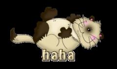 haha - KittySitUps