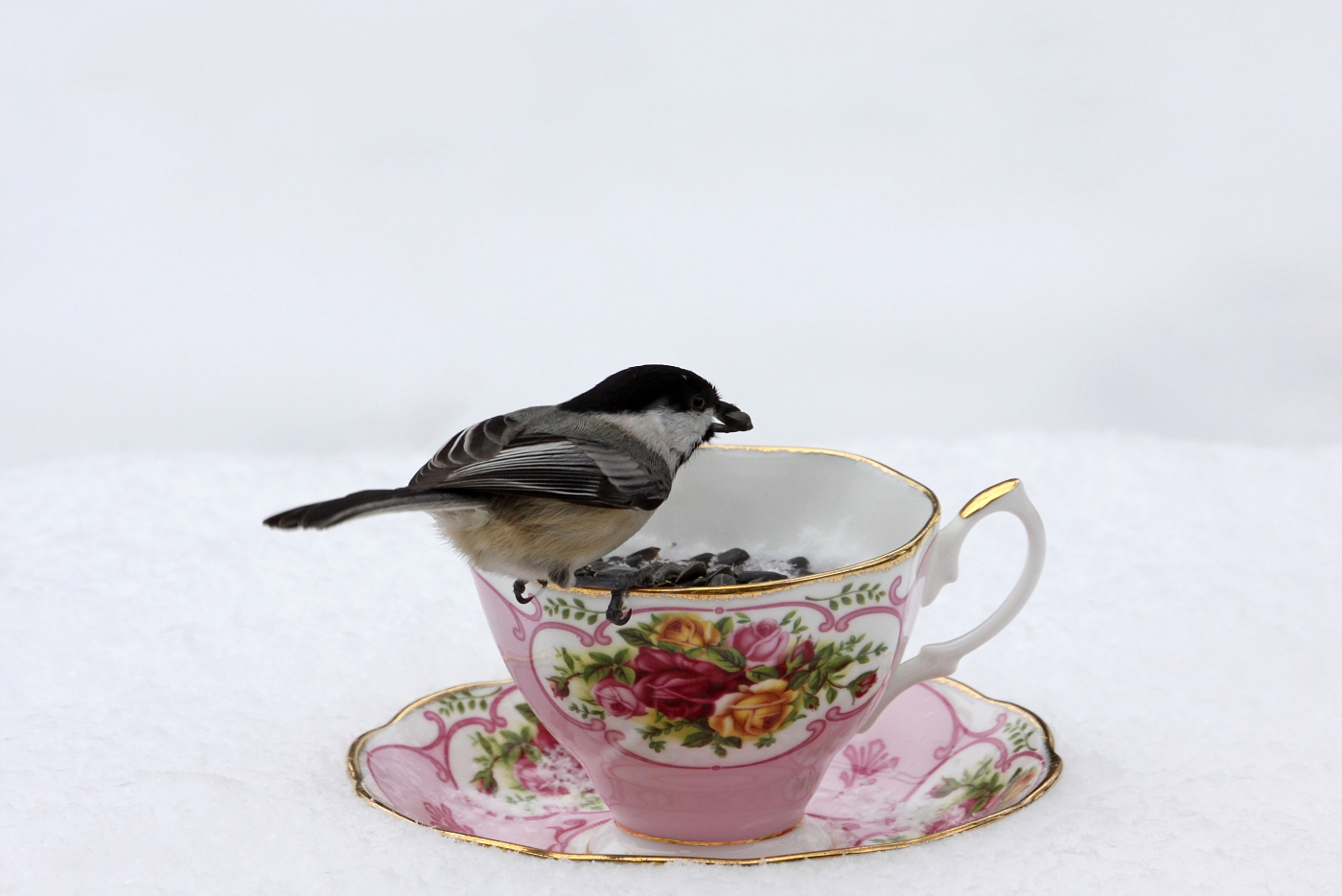 Teacup at the Feeder #5