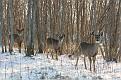 Deer 2013 #5