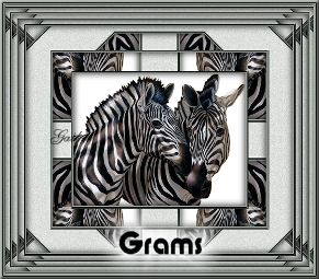 Grams-gailz0207-bsc~animals~zebras.jpg