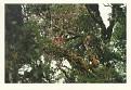 1983 TALAMANCA NP 4