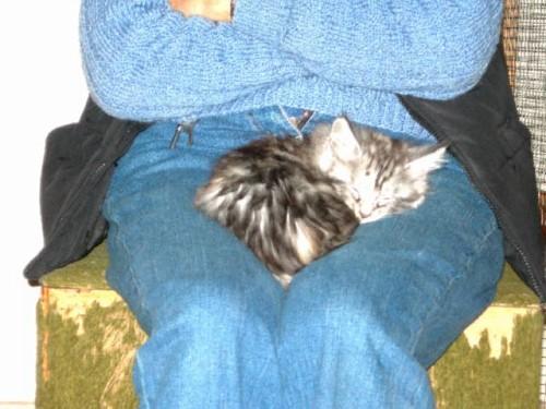 Snoozing2006-10-28