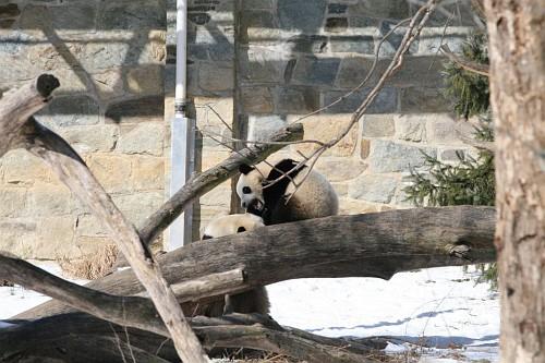 070216 Natl Zoo012