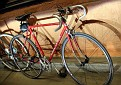 2337 red fixie