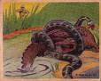 1938 Frank Buck Bring 'em Back Alive #11 (1)