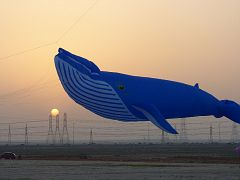 60 foot whale at sunset in Kuwait.