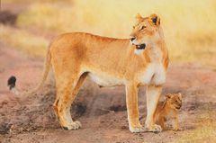 Ethiopia - LION NA