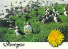 Faroe - PUFFIN NB
