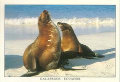 Galapagos - SEALION NA