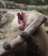 Singapore Zoo Parks 06