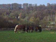 Dicke Pferde