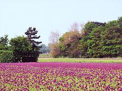 Purple is here. Purple is there. Purple is pretty much everywhere :-)